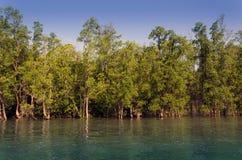 Bosque del mangle en Phuket Foto de archivo libre de regalías