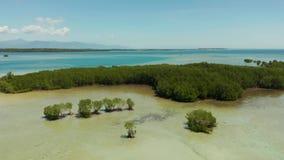 Bosque del mangle en un arrecife de coral Filipinas, Palawan metrajes