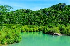 Bosque del mangle y río azul Imágenes de archivo libres de regalías