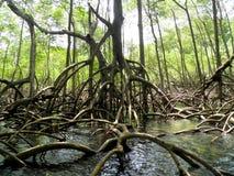 Bosque del mangle y República Dominicana del río Foto de archivo libre de regalías