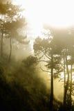 Bosque del misterio Fotografía de archivo