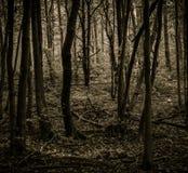 Bosque del misterio Imágenes de archivo libres de regalías