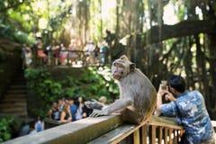 Bosque del mono en Bali imagen de archivo libre de regalías