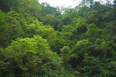 Bosque del Monte Emei, provincia de Sichuan, China fotografía de archivo