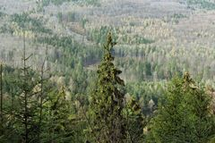 Bosque del moutain del otoño Imagen de archivo