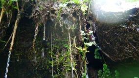 Bosque del musgo del agua de los descensos almacen de video