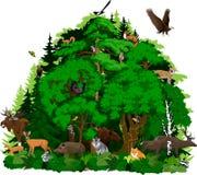 Bosque del norte del arbolado del vector con los animales ilustración del vector