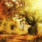 Bosque del otoño fotos de archivo libres de regalías