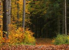Bosque del otoño Fotografía de archivo libre de regalías