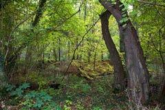 Bosque del otoño foto de archivo libre de regalías