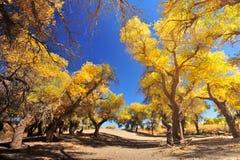 Bosque del otoño Imágenes de archivo libres de regalías