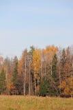 Bosque del otoño. Fotos de archivo