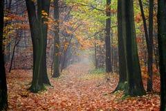 Bosque del otoño Foto de archivo
