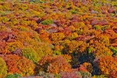 Bosque 4 del otoño Imagenes de archivo