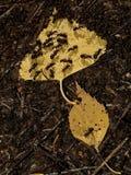 Bosque 4 del otoño Fotografía de archivo libre de regalías