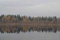Bosque del otoño cerca del lago Imagen de archivo
