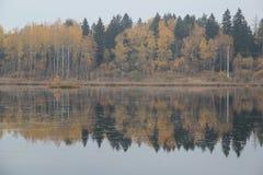 Bosque del otoño cerca del lago Foto de archivo libre de regalías