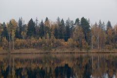 Bosque del otoño cerca del lago Imagen de archivo libre de regalías