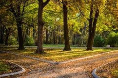 Bosque del otoño con dos trayectorias Imagen de archivo libre de regalías