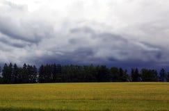 Bosque del otoño con el cielo del gris azul y las nubes blancas Fotografía de archivo libre de regalías