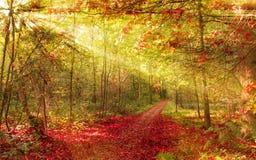 Bosque del otoño con el rayo de sol Foto de archivo libre de regalías