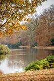 Bosque del otoño con las ramas de árbol y las hojas coloreadas Fotos de archivo libres de regalías