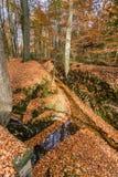 Bosque del otoño con las ramas de árbol y las hojas coloreadas Imagenes de archivo