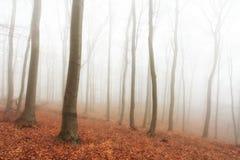Bosque del otoño con los árboles en la niebla imagenes de archivo