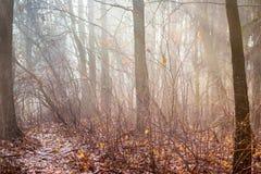 Bosque del otoño con los árboles y el fog_ desnudos de la mañana imágenes de archivo libres de regalías