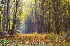 Bosque del otoño con un camino en el medio del trees_ imagenes de archivo