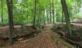 Bosque del otoño con una corriente y una trayectoria Foto de archivo