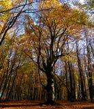 Bosque del otoño de Crimea Imagen de archivo
