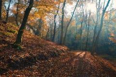 Bosque del otoño de los rayos solares fotos de archivo