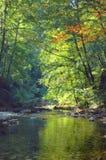 Bosque del otoño del vintage imagen de archivo