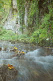 Bosque del otoño del vintage fotos de archivo