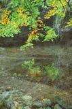 Bosque del otoño del vintage imágenes de archivo libres de regalías