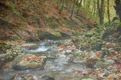Bosque del otoño del vintage imagen de archivo libre de regalías