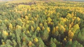 Bosque del otoño desde arriba almacen de metraje de vídeo