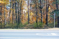 Bosque del otoño en el camino Imagenes de archivo