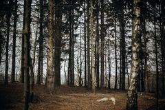 Bosque del otoño en el centro turístico escandinavo del parque nacional, color del otoño Imagenes de archivo