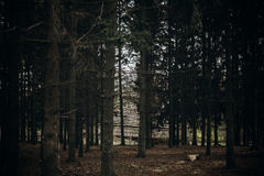 Bosque del otoño en el centro turístico escandinavo del parque nacional, color del otoño Fotos de archivo
