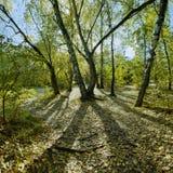 Bosque del otoño en el contraluz Foto de archivo libre de regalías