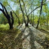 Bosque del otoño en el contraluz Fotos de archivo libres de regalías