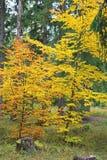 Bosque del otoño en el dolina de Ziarska - valle en alto Tatras, Slovaki Foto de archivo libre de regalías