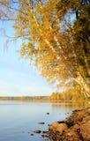 Bosque del otoño en el lago en la salida del sol Fotos de archivo libres de regalías