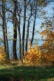 Bosque del otoño en el río Volga - Rusia - en un día soleado claro Imagen de archivo