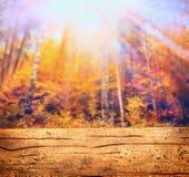 Bosque del otoño en la luz del sol y la tabla de madera, fondo de la naturaleza Imagen de archivo libre de regalías