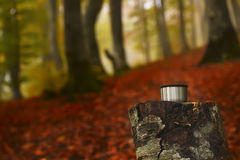 Bosque del otoño en la niebla fotos de archivo