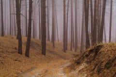 Bosque del otoño en la niebla de la mañana Foto de archivo