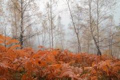 Bosque del otoño en la niebla de la mañana Imágenes de archivo libres de regalías